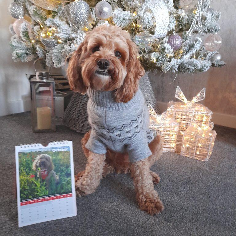 Milo with calendar & Christmas tree.